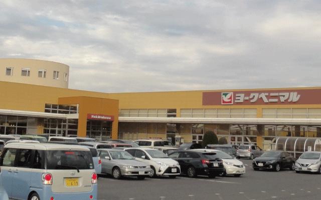 水耕栽培満点にんにく販売スーパーマーケット